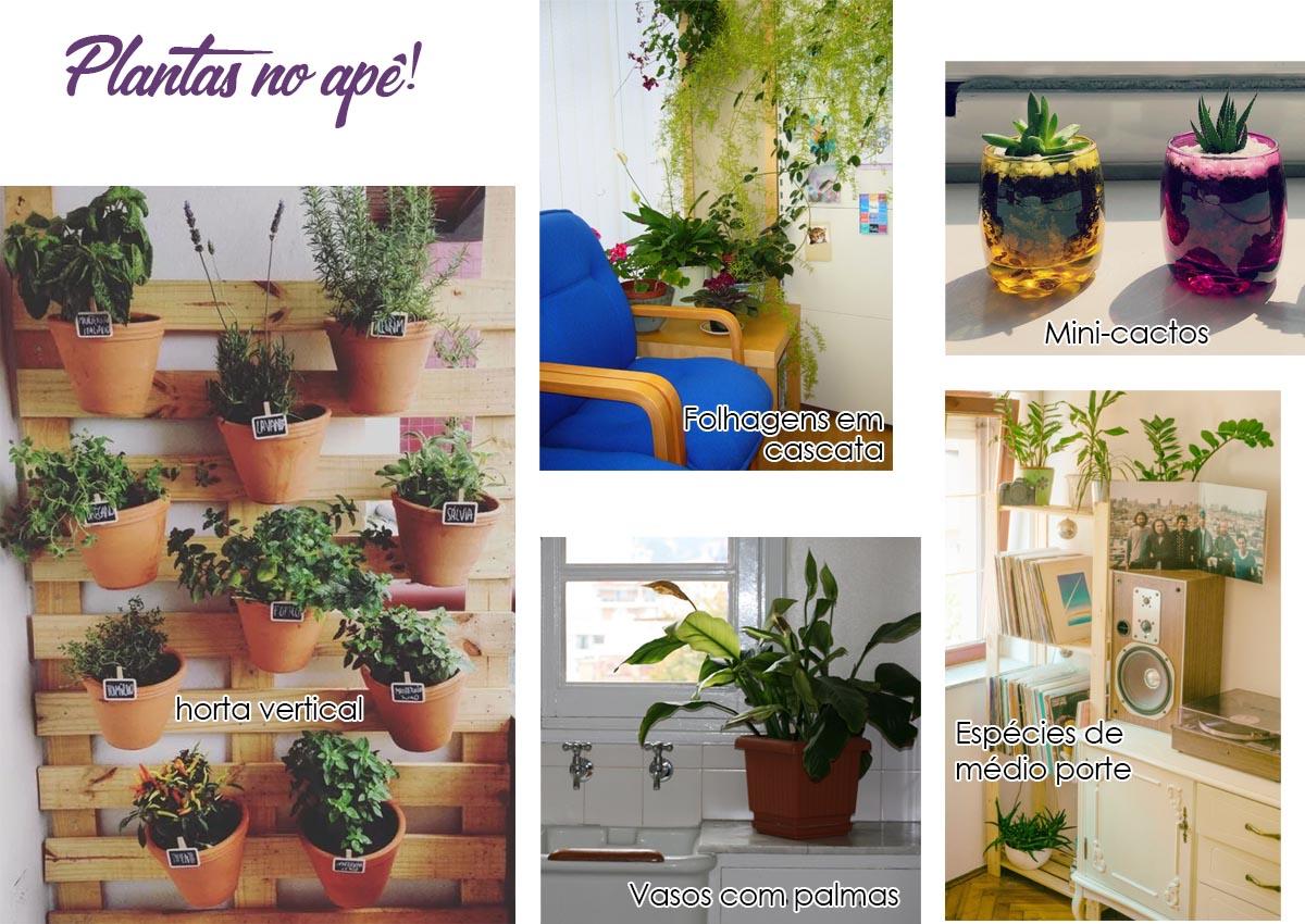 tipos de plantas em apartamentos
